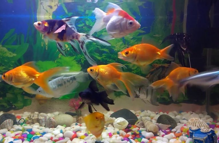 3 Important Tips for Taking Care of Your Tropical Fish