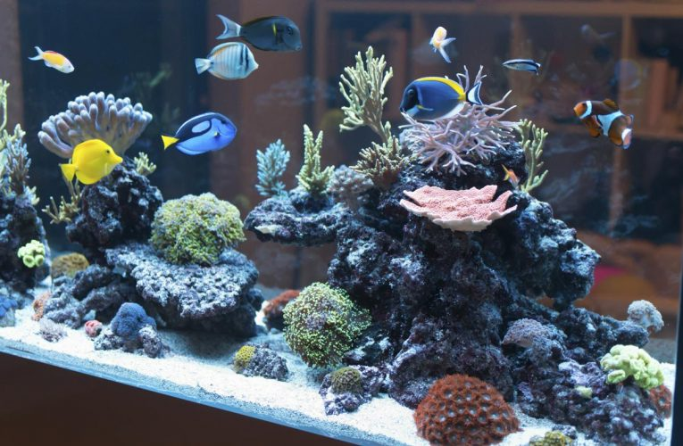 6 Steps to Setting Up Your Freshwater Aquarium