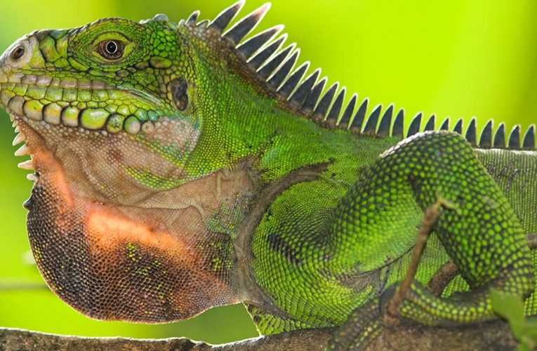 Choosing The Right Reptile