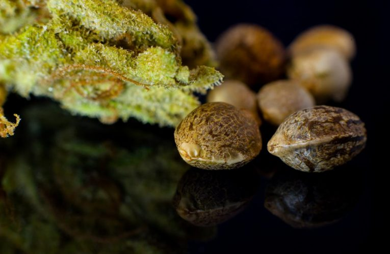 The Ultimate Guide To Buying Cannabis Seeds