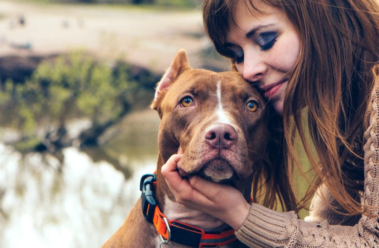 Information On The Best Pet Stores