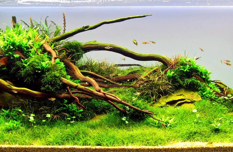 4 Tips One Must Know About Rooted Aquarium Plants